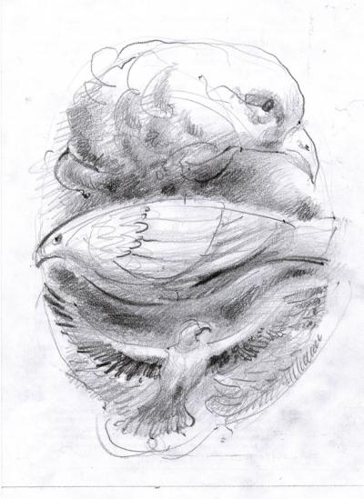 crtez ptice