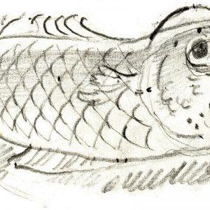Drawing – Fish