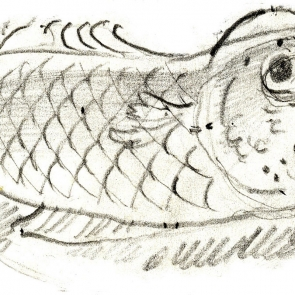 crtez ribe na suvom